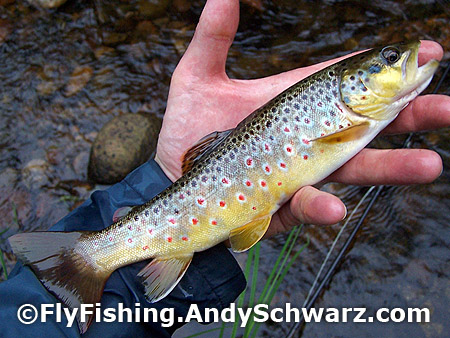 Nice brown on a prince nymph.